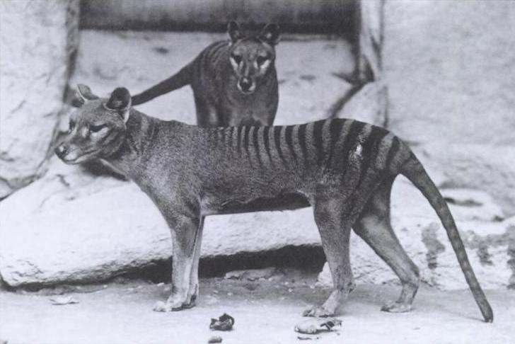 cedric-thyla